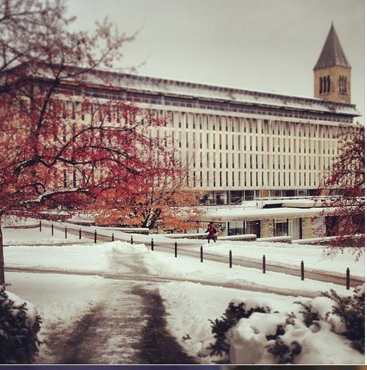 CI #04 Snowy Cornell